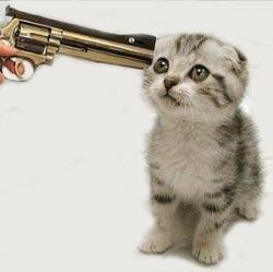 Kitten-gun